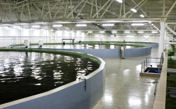 Intensive Recirculating Aquaculture Systems Ras 187 Land